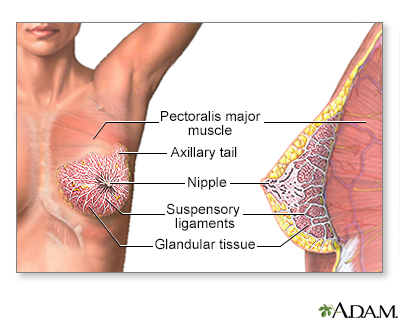 disorders Glandular breast