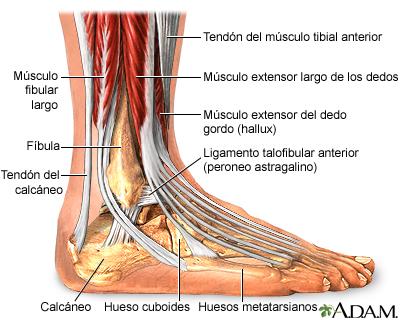 Artroplastia del tobillo