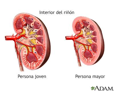 cambios en los riñones y en la vejiga con la edad