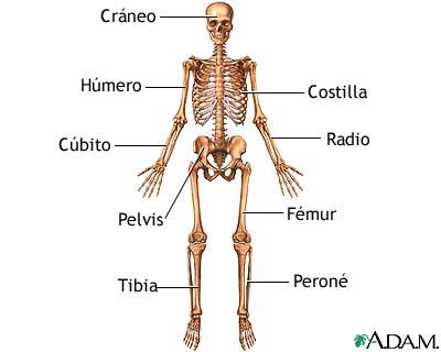Radiografía de la pelvis